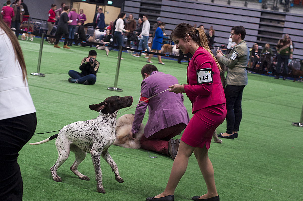 National Dog Show Best In Breed Video